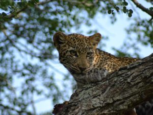 Thornybush Private Game Reserve, Hoedspruit, South Africa