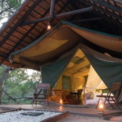 Game Lodge Accommodation Thornybush