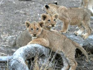 Thornybush Game Reserve Accommodation